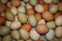 Eggs_multicolor_in_group